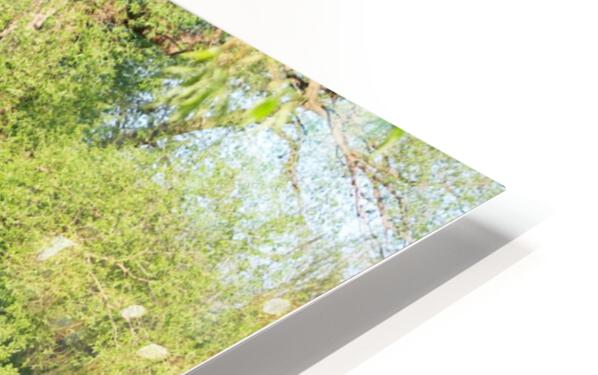 Relaxing Pond View HD Sublimation Metal print