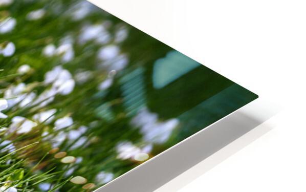 Confettis au jardin 3 HD Sublimation Metal print
