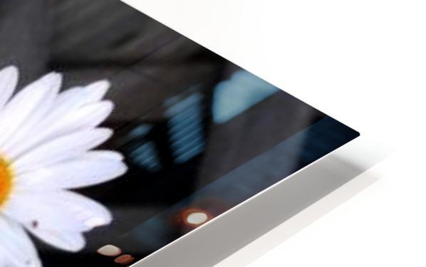 10392131_650028012172_7161699_n HD Sublimation Metal print