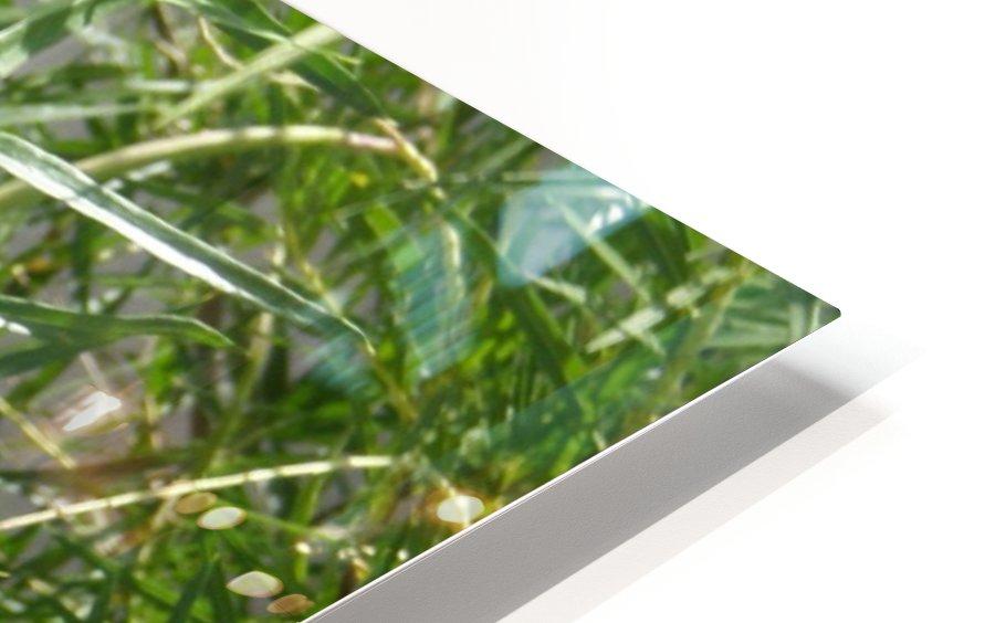 hummingbirdindesertwillow lrg HD Sublimation Metal print