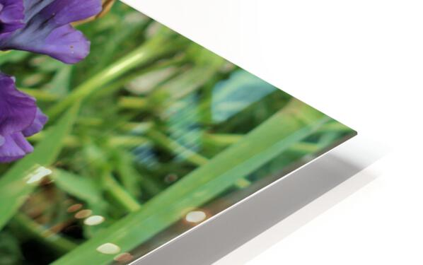 Two Iris HD Sublimation Metal print