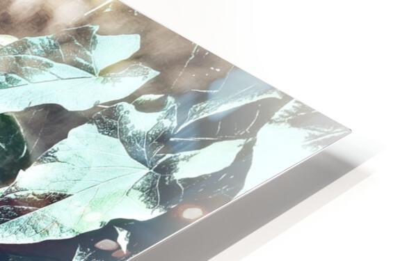 Scarlett Pimpernel with Vine HD Sublimation Metal print