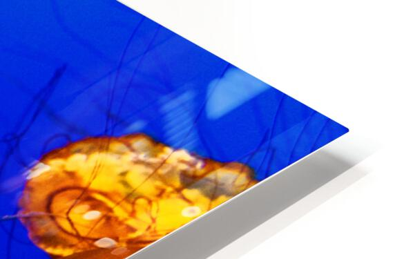 Monterey Jellyfish HD Sublimation Metal print