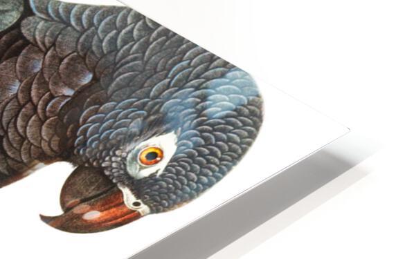 Macaw - Birds - Paradise - Tropical- Art Print - Wall Art - Parrot HD Sublimation Metal print