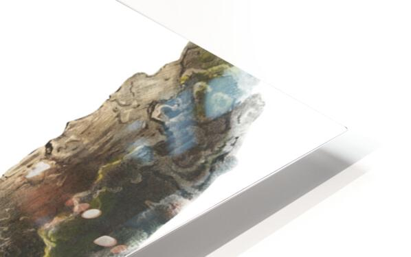 Bear Print HD Sublimation Metal print
