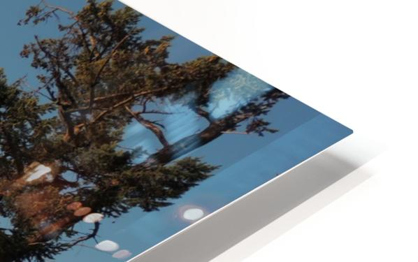 Standing Tall HD Sublimation Metal print