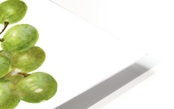 Green Grapes Wall Decor Vintage Botanical Poster Kitchen Art HD Sublimation Metal print