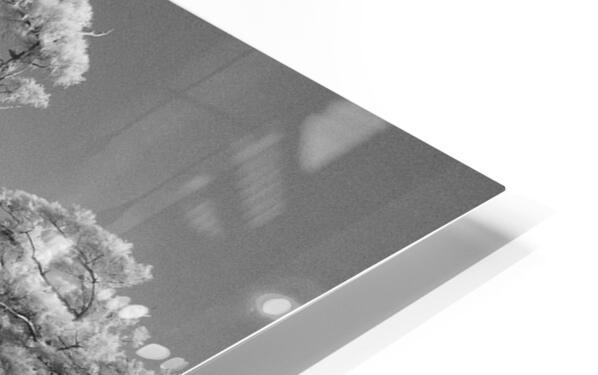 Blue cypress trees horizontal HD Sublimation Metal print