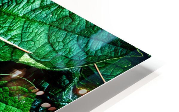 Garden Leaves HD Sublimation Metal print