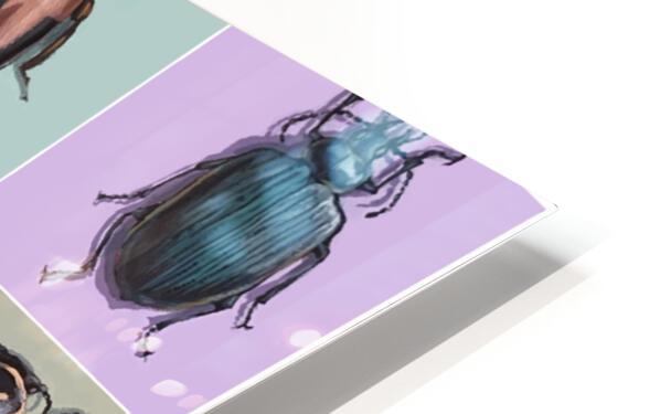 Assorted Beetles HD Sublimation Metal print