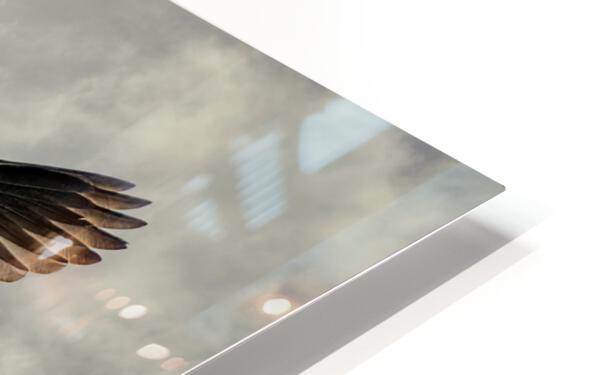 Flight Of The Heron HD Sublimation Metal print
