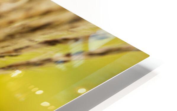 Flamboyantes Graminees no. 6 - Flamboyant Grasses no. 6 Impression de sublimation métal HD