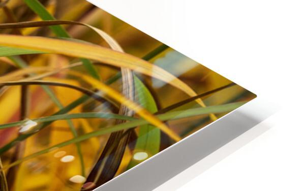 FLAMBOYANTES GRAMINEES NO. 1 - FLAMBOYANT GRASSES NO. 1 Impression de sublimation métal HD