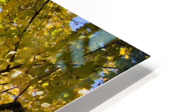 Fall Tree HD Sublimation Metal print