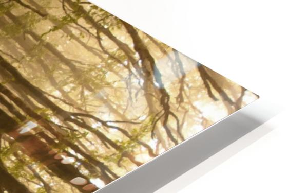 Paradoxical Forest HD Sublimation Metal print