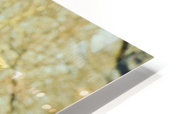 Aribian Camel HD Sublimation Metal print