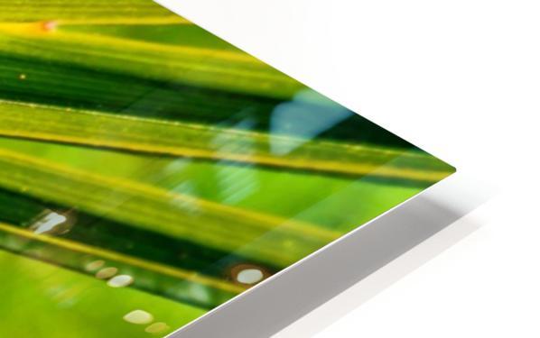 PALM-TREE LEAF 1 HD Sublimation Metal print