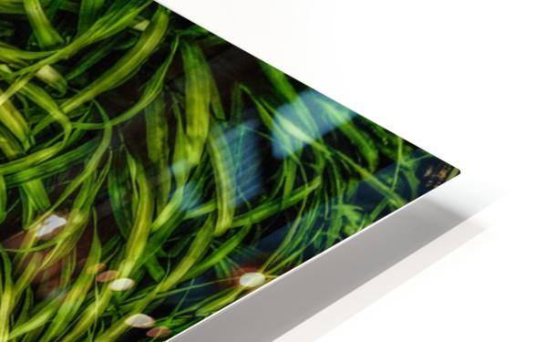 Green Chaos HD Sublimation Metal print