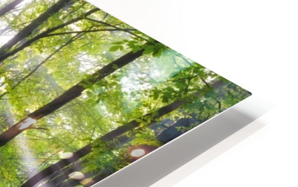 When the sun shine on your way HD Sublimation Metal print