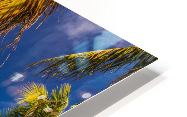Palm trees low angle view HD Sublimation Metal print