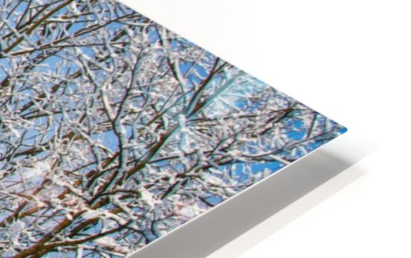 Forest covered with snow HD Sublimation Metal print