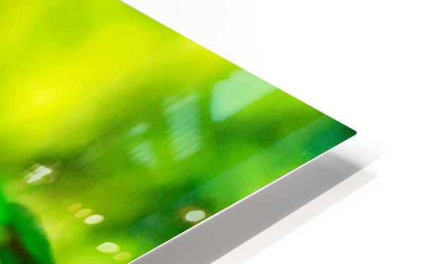 MHPBartlettArboretum 10 HD Sublimation Metal print