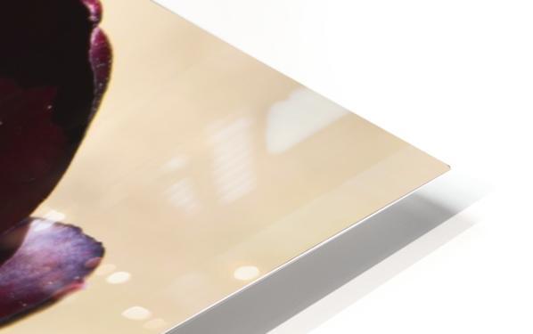 Solar cups HD Sublimation Metal print