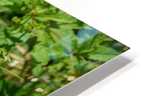 Wild flowers HD Sublimation Metal print