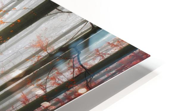 Autumnal Tracks HD Sublimation Metal print