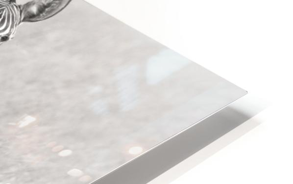 Zebras HD Sublimation Metal print