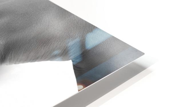 Succulent Silk HD Sublimation Metal print