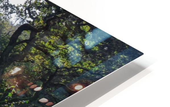 Dewerstone Woods HD Sublimation Metal print