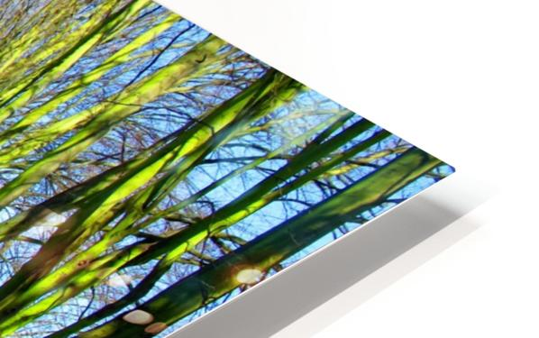 Summer Avenue HD Sublimation Metal print