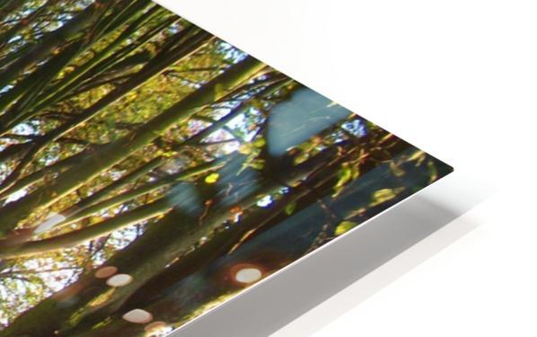 Autumnal Avenue HD Sublimation Metal print