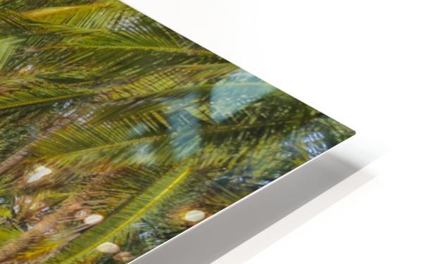 Earth Topical Road Porto Galinhas Brazil 2 HD Sublimation Metal print