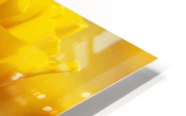 Yellow Poppy HD Sublimation Metal print