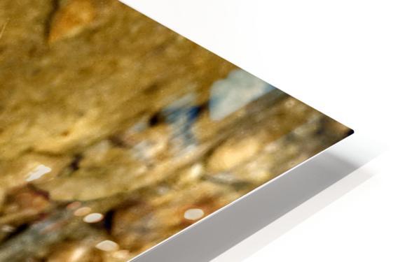 Baird's Rat Snake Tongue Flick HD Sublimation Metal print