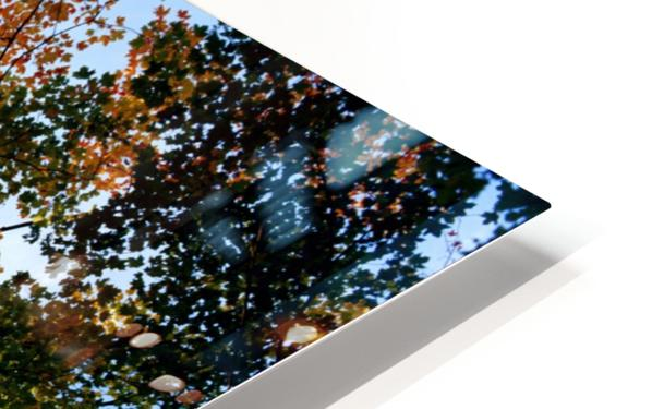Autumn Trees Low-Angle HD Sublimation Metal print