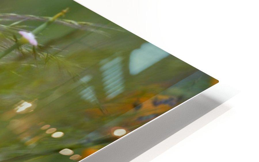 Close Up Of Orange Poppy Flowers HD Sublimation Metal print