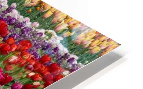 A Tulip Field HD Sublimation Metal print