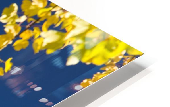 Autumn Trees HD Sublimation Metal print
