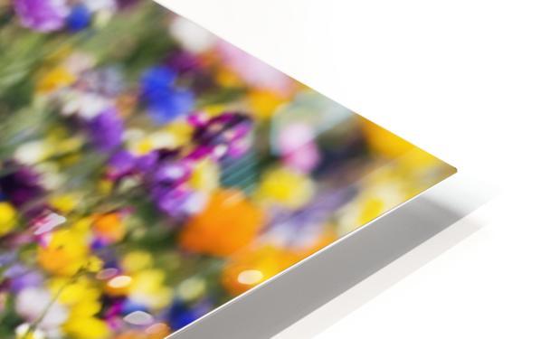 Wildflowers, Mount Hood, Oregon, Usa HD Sublimation Metal print