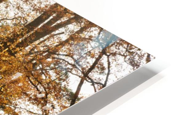 Trees In Autumn Colours Casting A Shadow On The Ground; Northumberland, England HD Sublimation Metal print