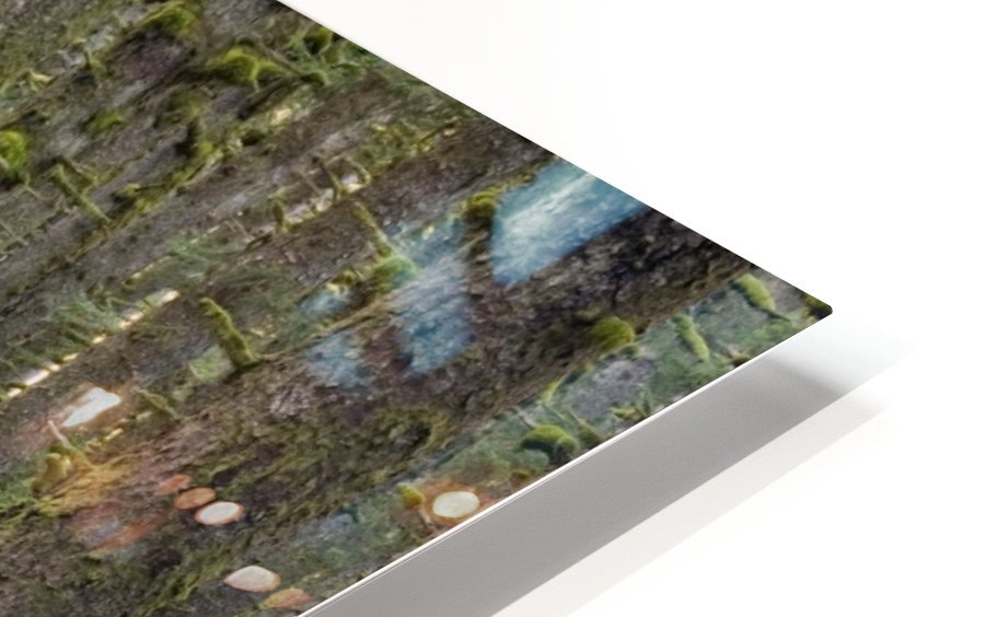 Spruce Forest & Moss Near Coast Kodiak Island Southwest Alaska HD Sublimation Metal print