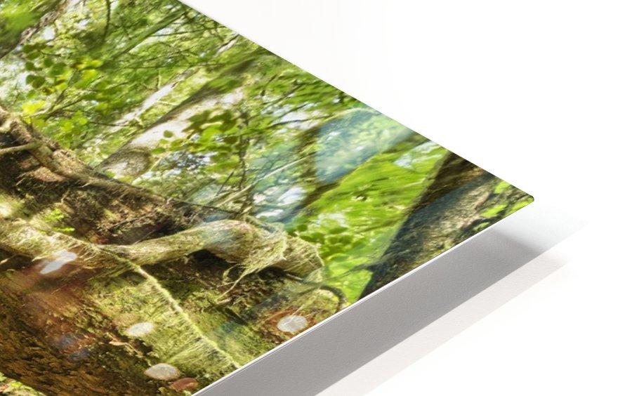 Rainforest in Avatar Grove near Tofino; British Columbia, Canada HD Sublimation Metal print