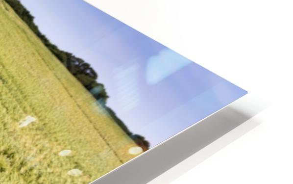 Wide angle image of a barley field with blue sky; Brittany, France HD Sublimation Metal print
