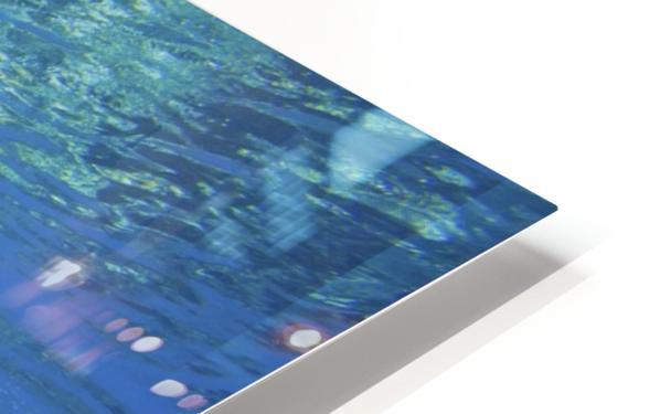 green sea turtle swimming in ocean sea HD Sublimation Metal print