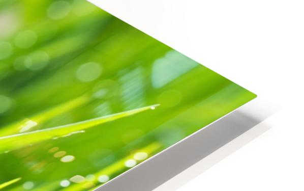 Close up of fresh grass with water drops in the early morning HD Sublimation Metal print