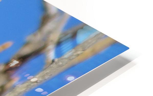 Golden Eagle VP3 HD Sublimation Metal print