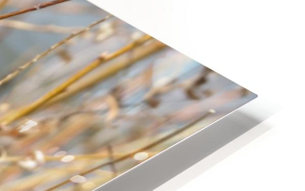 Feather in Reeds at the Glenn VP3 HD Sublimation Metal print